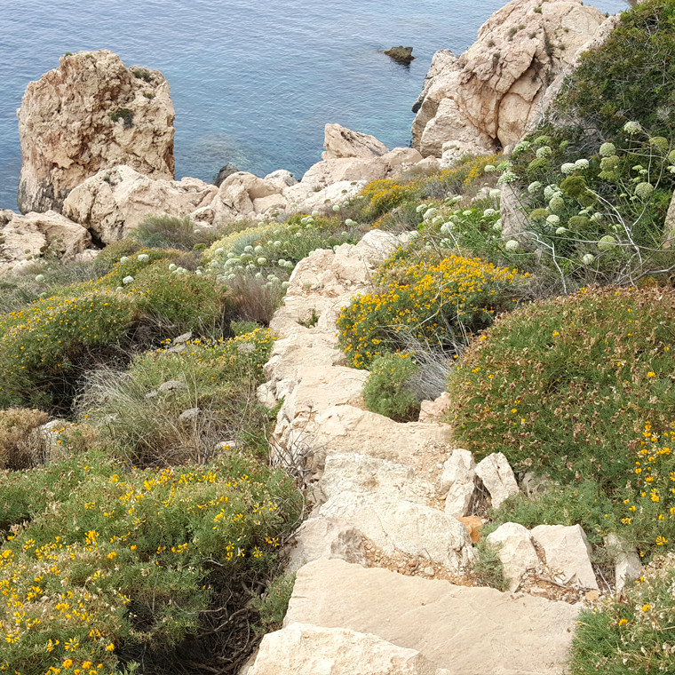 Mediterranean Planting Inspiration from Ibiza